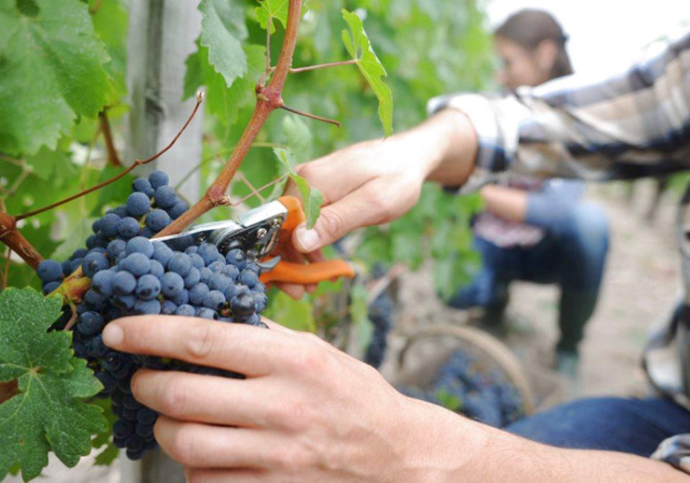 VINO CHIANTI IN TOSCANA Il vino rosso simbolo della  Toscana